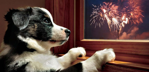 dogs and fireworks - always draw curtains image
