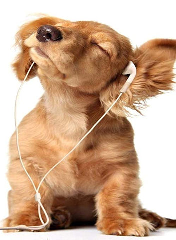 can music help your dog relax - wiserpet.com