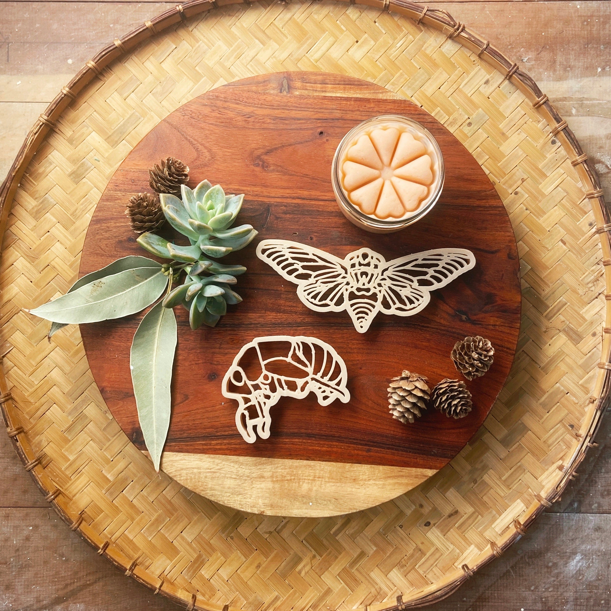 Cicada Eco Cutter Set