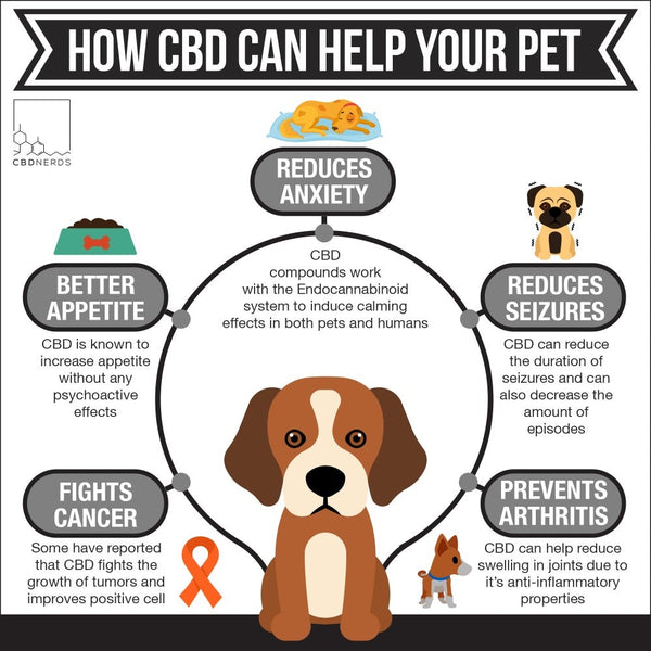 How Can CBD pets
