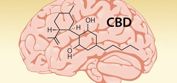 CBD effects on the brain