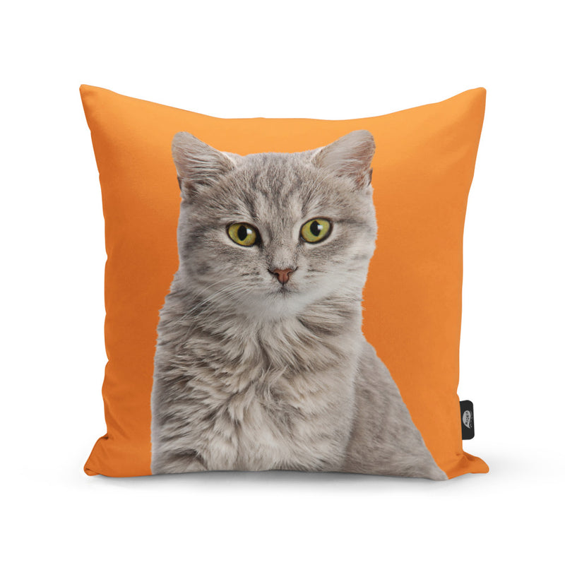 Your Cat Cushion