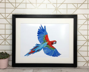 Colourful Parrot Print