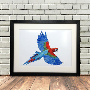 Colourful Parrot Painting Print