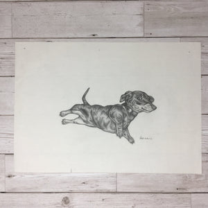 Sausage Dog Sketch Original Artwork