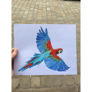 Painted Parrot Coaster