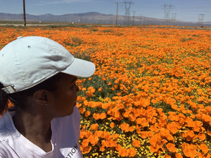 Mesmerized and Relaxed, In a Poppy Flower Feild