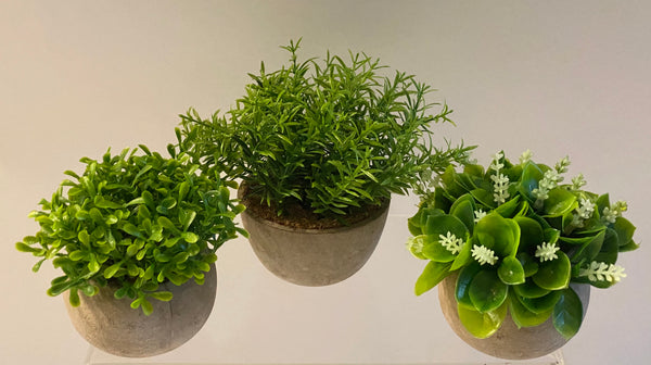 Barbara King Set of 3 Individually Potted Faux Succulents