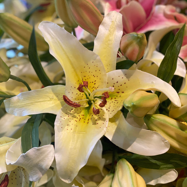 Barbara King 5pc. Award Winning  Oriental Lily Garden Party