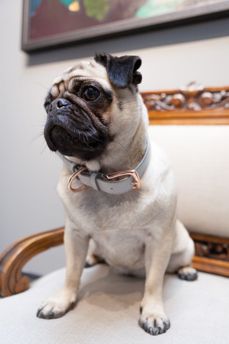 Dandy Collar - Dog Collar - Stoned & Waisted Fashion