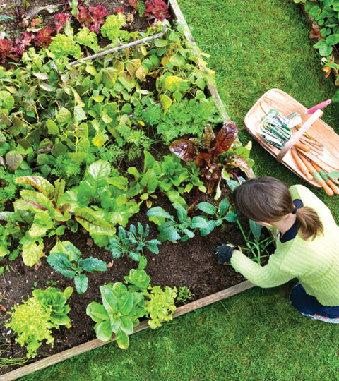 5 ways to make money off your garden