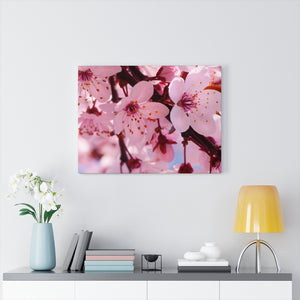 Cherry Blossom Canvas Gallery Wraps
