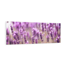 Load image into Gallery viewer, Dutch Lavender Canvas Gallery Wraps