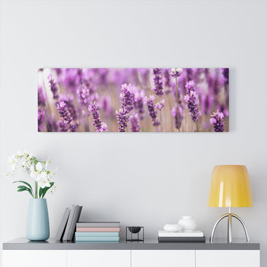 Dutch Lavender Canvas Gallery Wraps