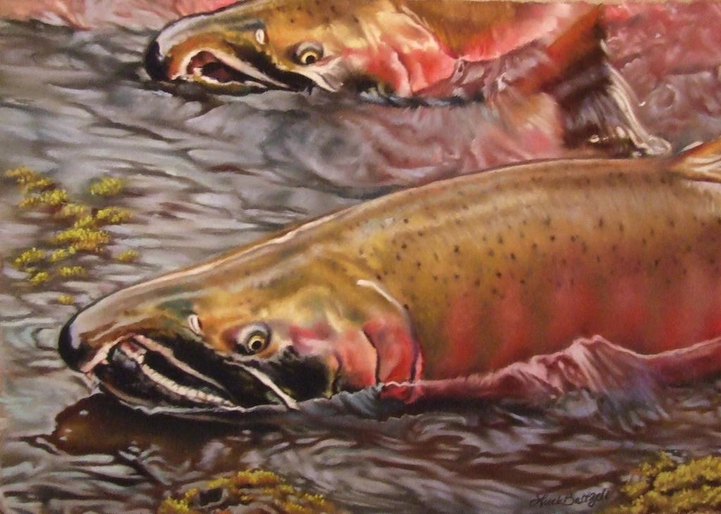 Coho Salmon by Amanda Luck Baltzell