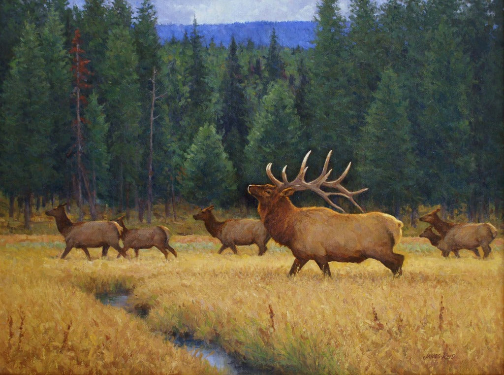 Elk at Norris Meadows by James Reid