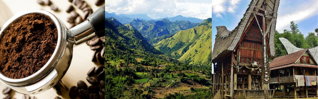 Toraja: The Land of Traditional Houses, Luscious Greenery and Coffee Beans