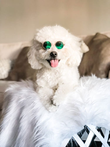 Trendy dog glasses