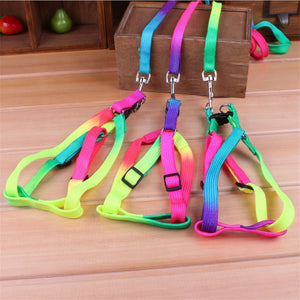 Colorful rainbow harness with leash