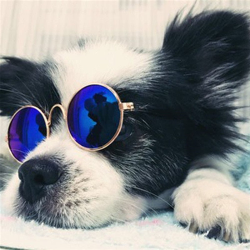 Trendy dog glasses - The Wiggle Project