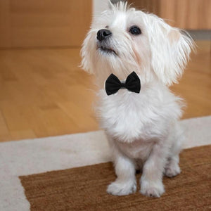 Fancy bow tie