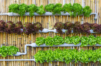 Your Go-To Guide to Growing a Vertical Vegetable Garden