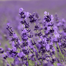 Load image into Gallery viewer, *NEW* Lavender Nappy Balm - 10g