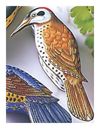 Handpainted Bird Boxes -Woodpecker