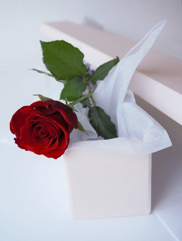 Single Rose | Valentines Day | Buy Flowers | Buy Roses | Zimzee Flowers | Auckland New Zealand