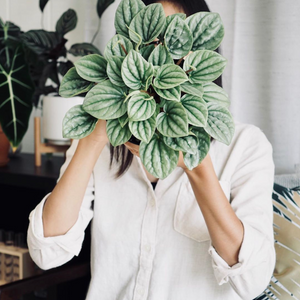 interview plant addict #5 flipaflora