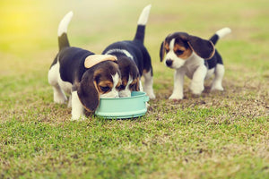 Beagle: 5 Things you Should Know