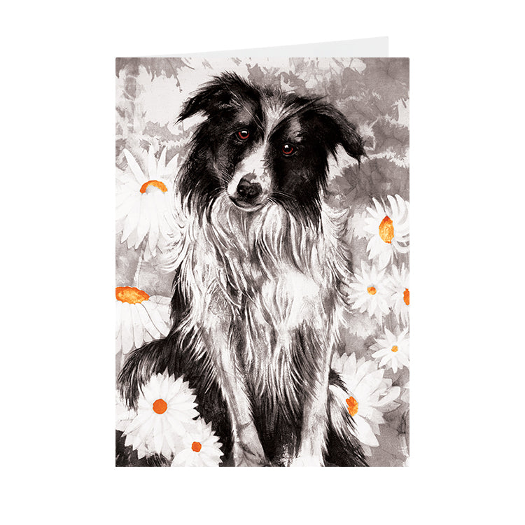 Dogs - Collie - Greeting Card - V_113