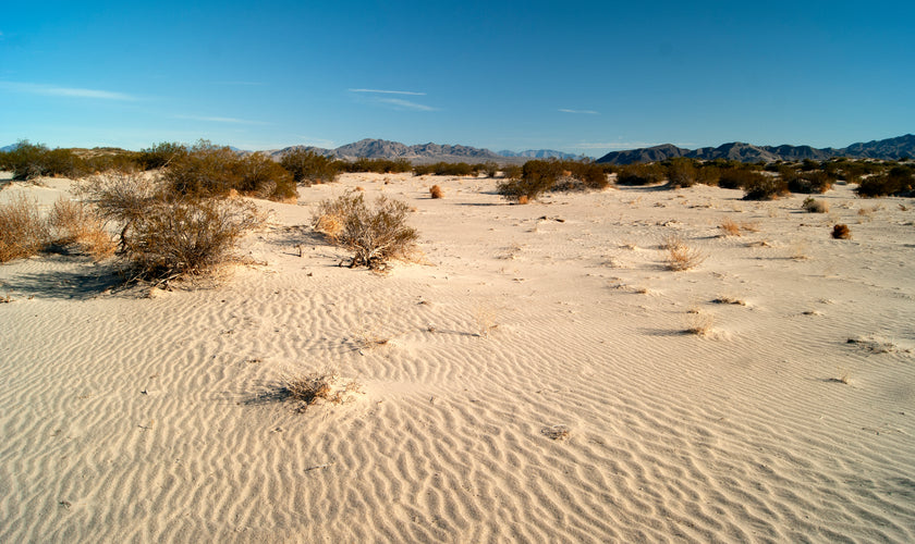 Giving Back: Spotlight on Mojave Desert Land Trust