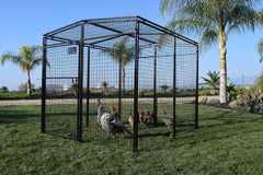 chicken run with chickens inside