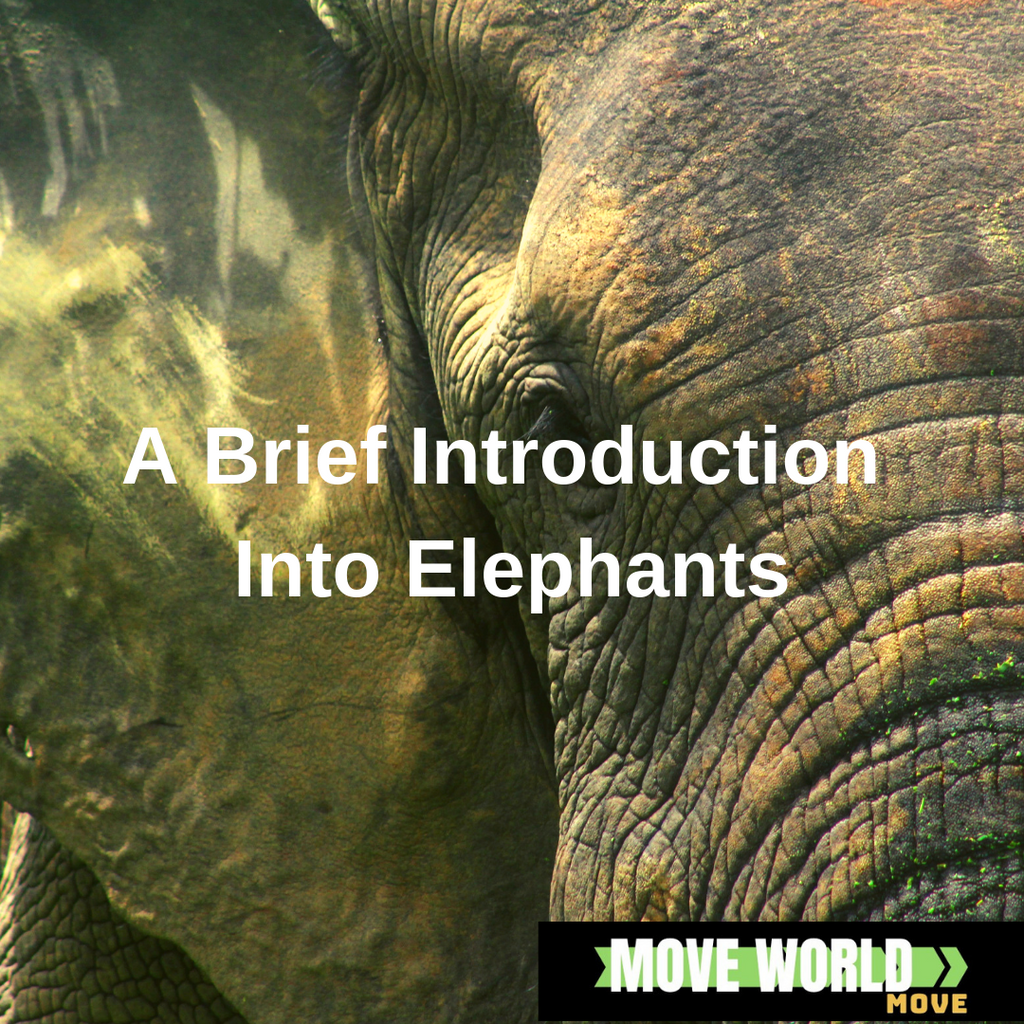 An Introductory Guide into Elephants with Facts About Elephants