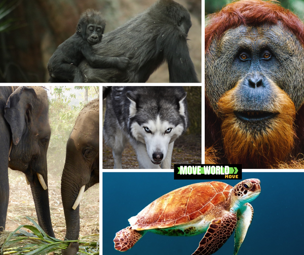 MoveWorldMove Animals
