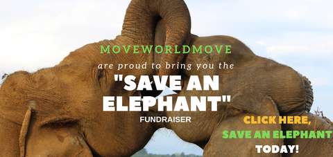 Free Aromatherapy Elephant Necklace Giveaway save an elephant