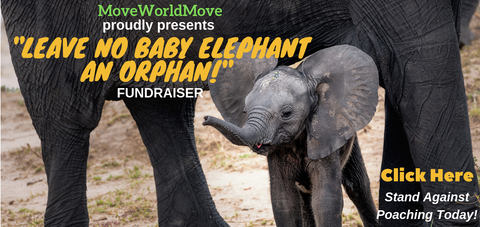 Free Aromatherapy Elephant Necklace for supporting an amazing cause