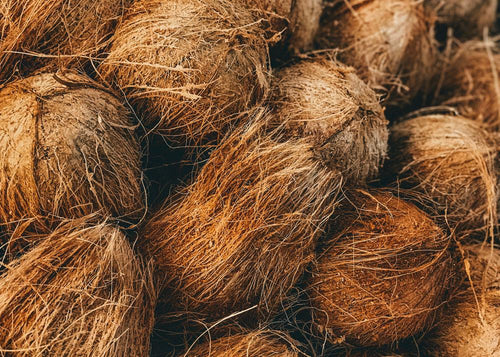 Coconuts used to produce hookah coals