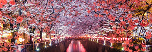Don't Miss In Early April Tokyo Cherry Blossom