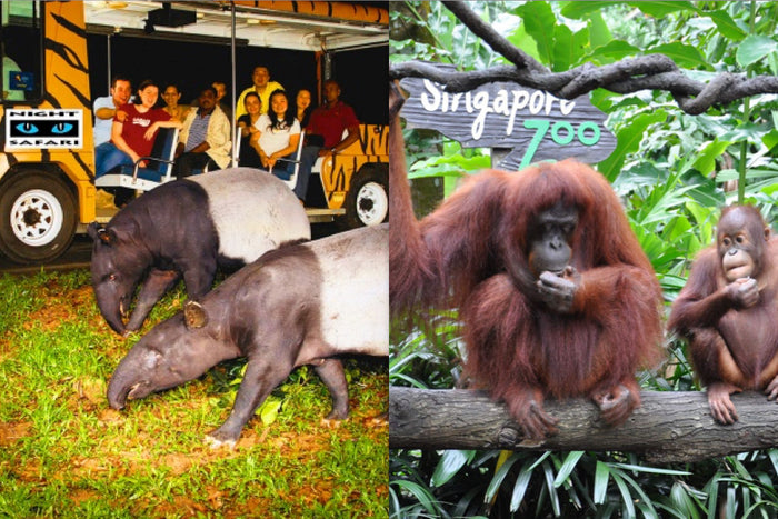 Night Safari + Zoo with Tram Ride