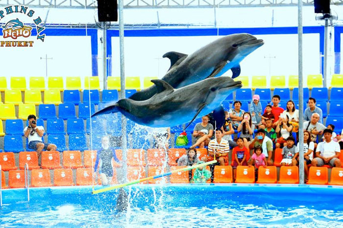Dolphins Bay Show