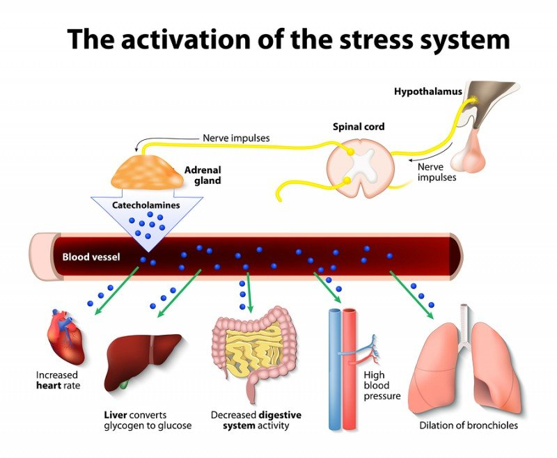 effects of stress on body
