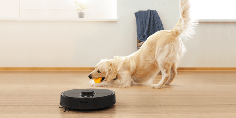 Pets living in an apartment with Roborock robot cleaner