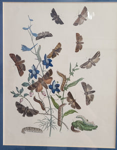 Butterfly Lithograph Framed Prints