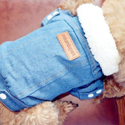 Denim Jacket with Fur Collar for dogs, dog clothes, small dog clothes, dogs clothing, dog clothes female, dogs clothes boy, Dogs Clothes For Small To Medium Dog, Idepet Home, BowWow Shop - Top Dog Clothing Store