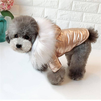Foil & Fur Jacket for dogs, dog clothes, dogs clothes, dog clothing, small dog clothes, dogs clothing, dog clothes female, dogs clothes boy, Dogs Clothes For Small To Medium Dog, KeepBest, BowWow Shop - Top Dog Outfits Store