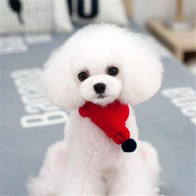 Knit Pom-Pom Scarf for dogs, dog clothes, dogs clothes, dog clothing, small dog clothes, dogs clothing, dog clothes female, dogs clothes boy, Dogs Clothes For Small To Medium Dog, Liz's Wonderland, BowWow Shop - Top Dog Outfits Store