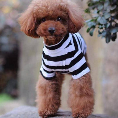 Large Stripe Turtleneck Shirt for dogs, dog clothes, dogs clothes, dog clothing, small dog clothes, dogs clothing, dog clothes female, dogs clothes boy, Dogs Clothes For Small To Medium Dog, Idepet Home, BowWow Shop - Top Dog Outfits Store