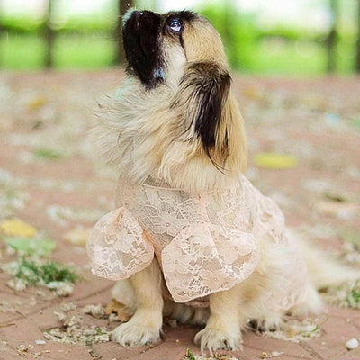 Love Me Lace Dress for dogs, dog clothes, dogs clothes, dog clothing, small dog clothes, dogs clothing, dog clothes female, dogs clothes boy, Dogs Clothes For Small To Medium Dog, C-King, BowWow Shop - Top Dog Outfits Store